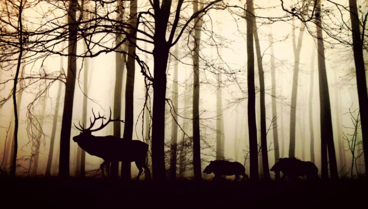 forest-1818690_1920