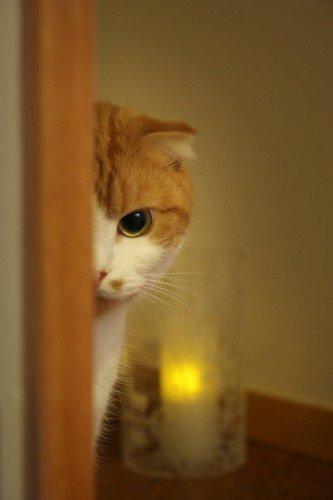 cat-peeping