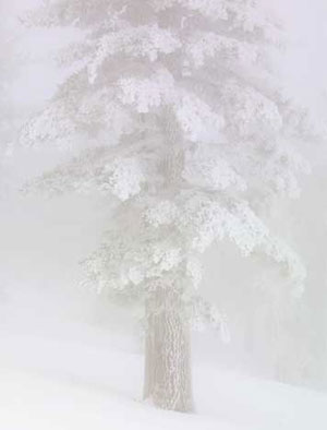 tahoe-tree-in-fog-thumb