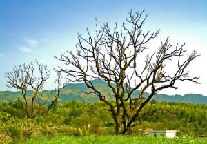 粗壯的樹幹跟深色的草地放在下方,而且左右也有一大一小的樹木來平衡畫面 Photo by {link:http://www.flickr.com/photos/davelau/1072046663/}Chi King{/link}