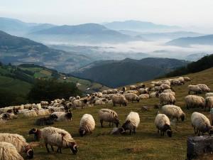 """遠處的山峄顯出近處的一群羊,讓畫面更有""""深度""""和""""空間感"""" Photo by {link:http://www.flickr.com/photos/jule_berlin/839245545/}Jule_Berlin{/link}"""