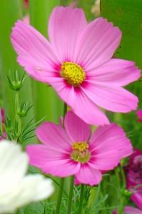 只抽取其中一兩朵花作特寫,主題突出
