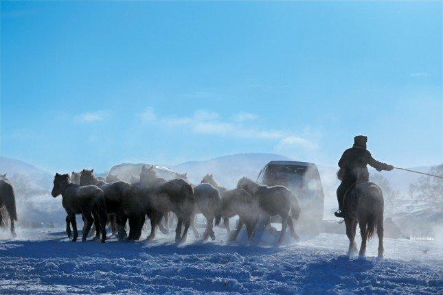 途經內蒙烏蘭布統草原,竟然碰上一大群蒙古馬,見機不可失,攝影師即時提起相機下車,奔跑追逐拍攝雪馬美態。