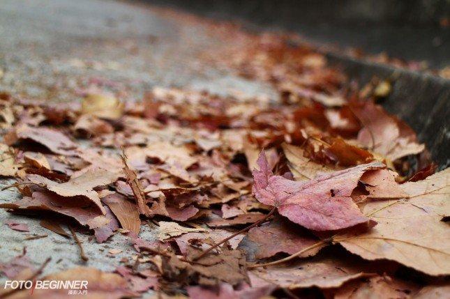 就算是地上的落葉也可以作引導線,相片也作少量傾斜來避色呆板 (Canon EOS M / 33mm / f/5 / 1/100s / ISO100 / 日光白平衡)