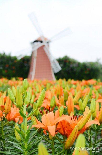 對焦在前景的花叢上,利用背景的風車作襯托,淺景深效果能突出主體。