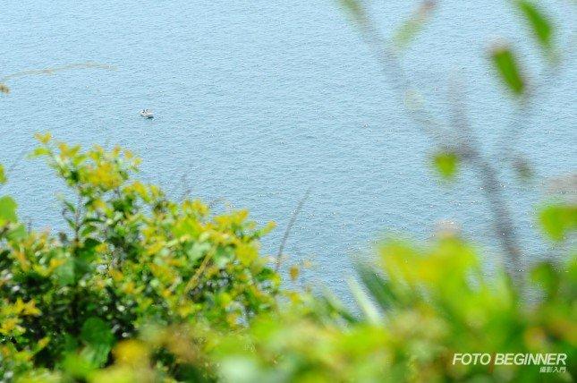 大光圈、對焦在遠處 = 前景模糊,襯托主體 (Nikon D700 f/2.8 50mm)