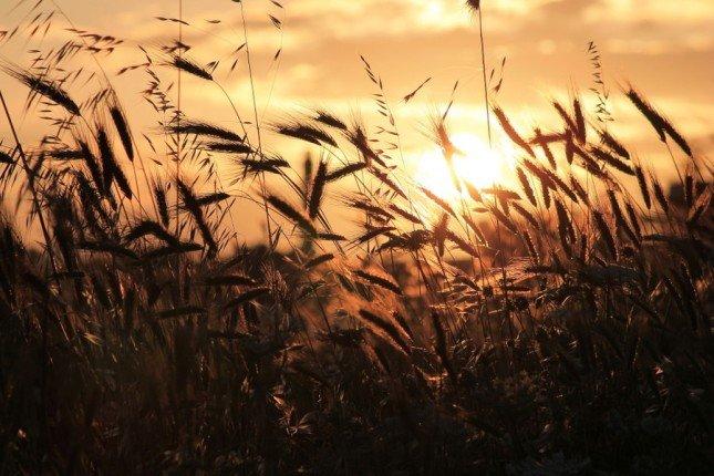 精彩相片拍攝教學 (115) – 日落 - No.1 攝影技巧學習平台 | 攝影課程