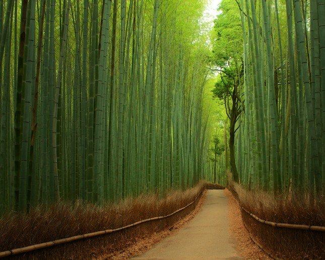 Photo by {link:http://500px.com/photo/9349539}Yuya Horikawa{/link}