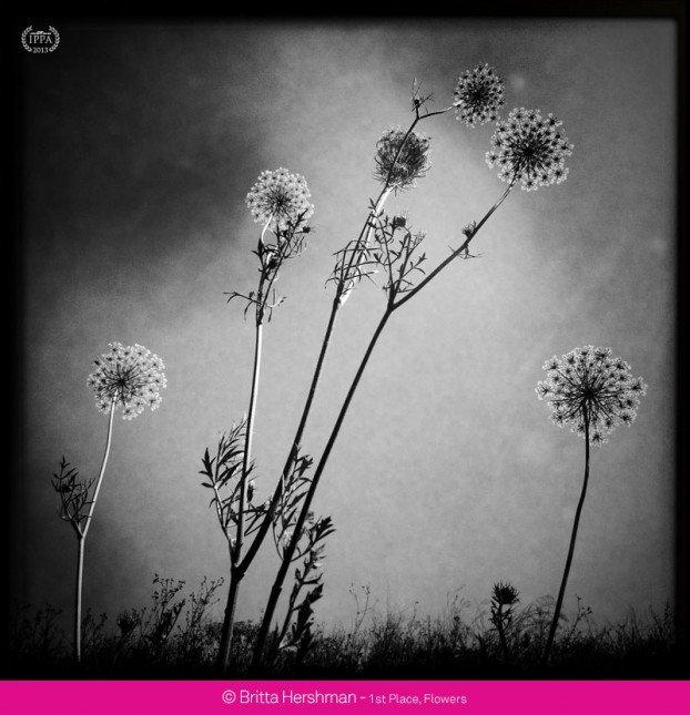 花卉組 第一名 - Britta Hershman