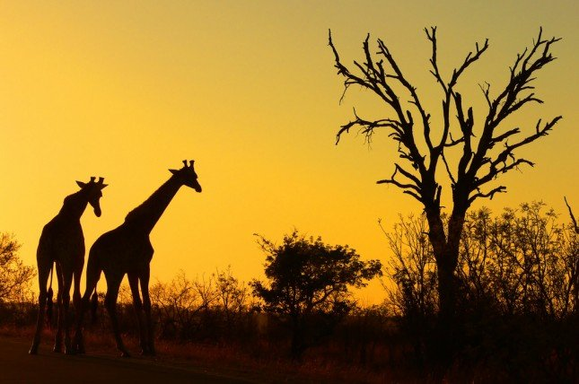 Picture: {link:http://www.flickr.com/photos/arnolouise/3010504684}Arno Meintjes Wildlife{/link}