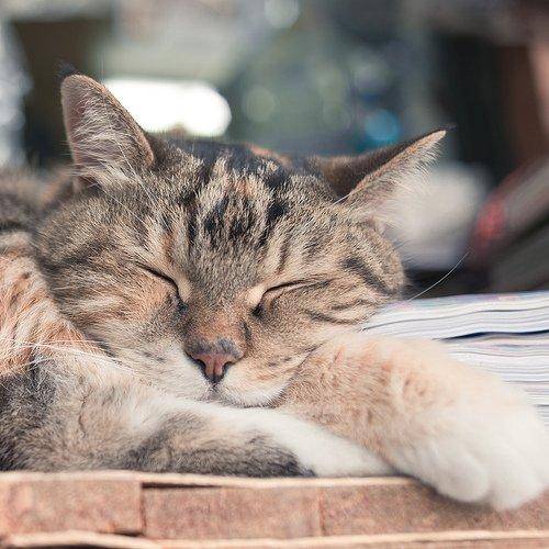 悠閒的貓 同樣,貓咪的身體沒有很特別,所以我亦採用了正方形裁切,只特寫貓咪的睡姿。