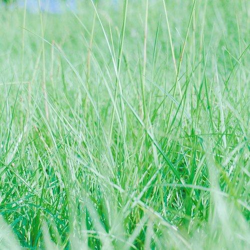 エメラルド草 構圖比較單一的照片,我也會用正方形收窄觀眾的視角。