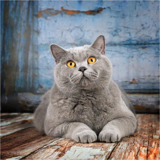 精彩相片拍攝教學 (145) – 貓貓拍攝小技巧 - No.1 攝影技巧學習平台 | 攝影課程