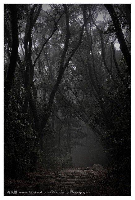 茂密幽暗的林徑