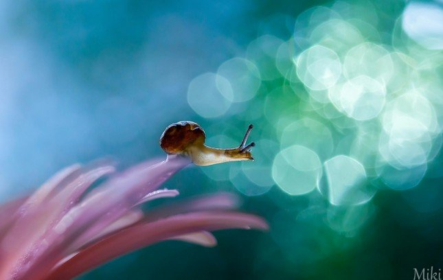Photo by {link:http://500px.com/photo/46684336}Miki Asai{/link}