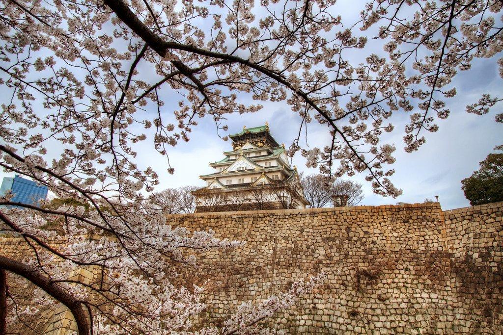 Замок Осака Япония сакура  № 3700656  скачать