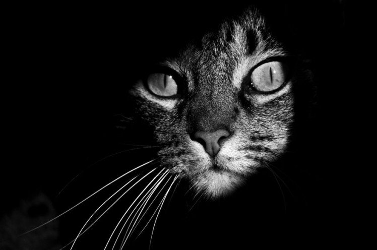 Photo by {link:http://500px.com/photo/12884787/sneaking-cat-by-jo%C3%A3o-domingues}João Domingues{/link}