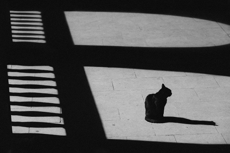 Photo by {link:http://500px.com/photo/47815834/black-cat-white-floor-by-sebastian-gruia}Sebastian Gruia{/link}