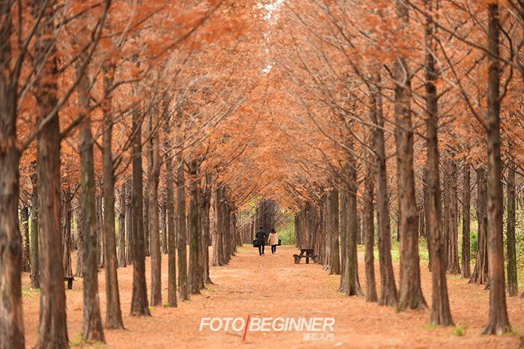 利用長焦鏡頭減少遠處樹幹跟近處的距離。