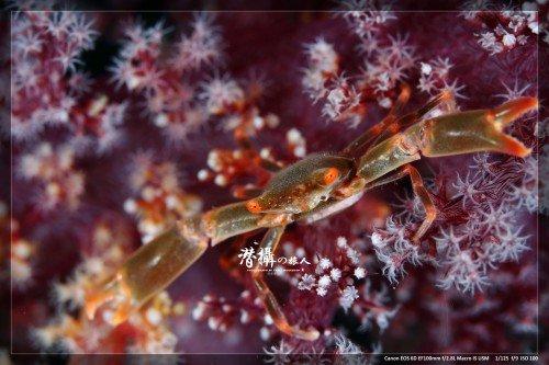crab1_w