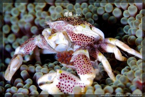 crab2_w