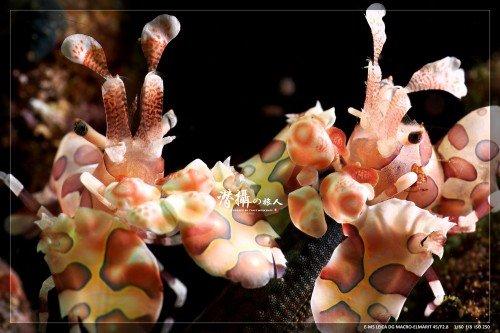 shrimp_w