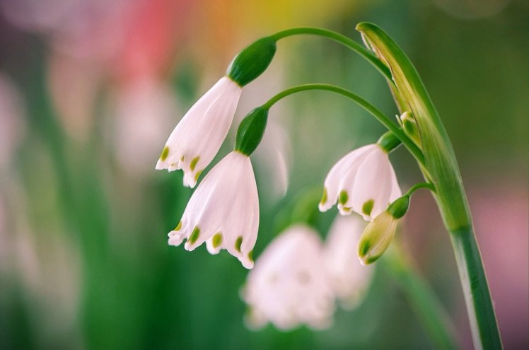 Photo by {link:https://500px.com/photo/102316435/snowdrops-by-b-n}B N{/link}