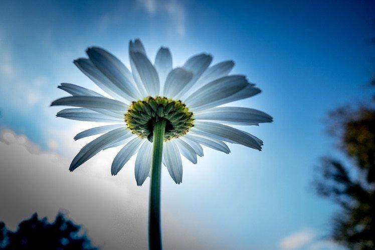 Photo by {link:https://500px.com/photo/102235225/flower-by-liang-li}Liang Li{/link}