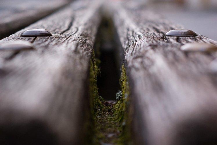 大光圈可以令景深變淺。 (Photo by {link:https://www.flickr.com/photos/tim_peters/3834773272}Tim Peters{/link})