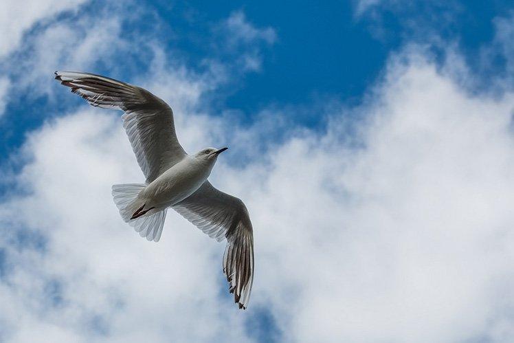 要拍攝飛行中的雀鳥,快門速度要快,這張相片便用了 1/800s 的快門來拍攝。 (Photo by {link:https://www.flickr.com/photos/catburton/16322698862}Cat Burton{/link})