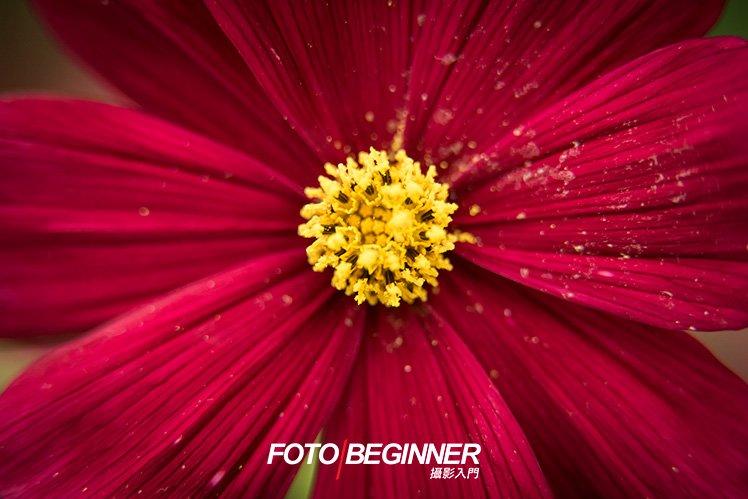 使用 Extension Tube 微距筒 配合 70-200mm 鏡頭,也可以把非常小的花朵拍下,這樣便不用花錢購買專職的微距鏡頭了!