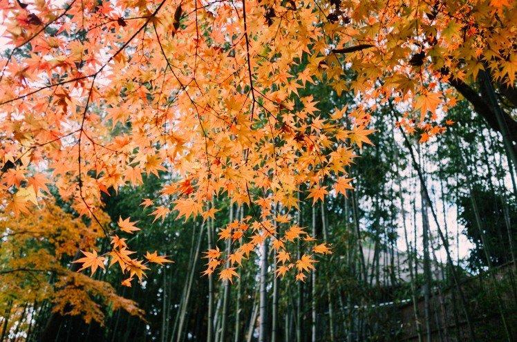 gr-dreaming-at-kyoto_18955686624_o