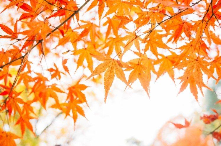 gr-dreaming-at-kyoto_18957333473_o