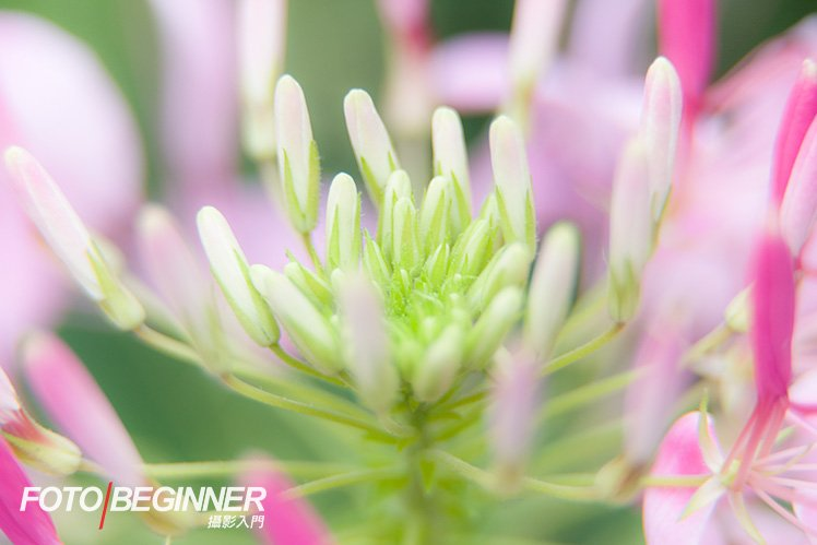 Full-frame 在焦距的因素下比較容易製造淺景深效果,在拍攝微距相片時需特別小心。