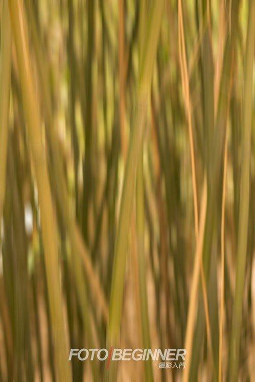利用慢快門可以拍出抽象的相片!