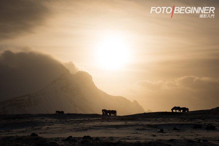 冰島馬的剪影