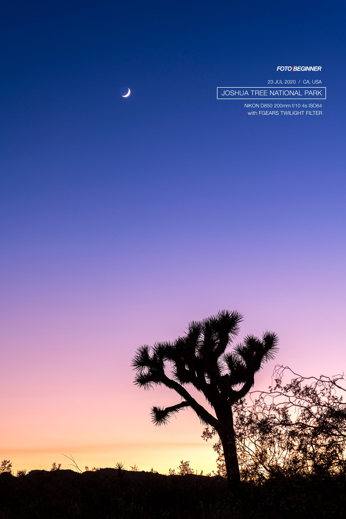 Joshua Tree sunset with moon in the sky