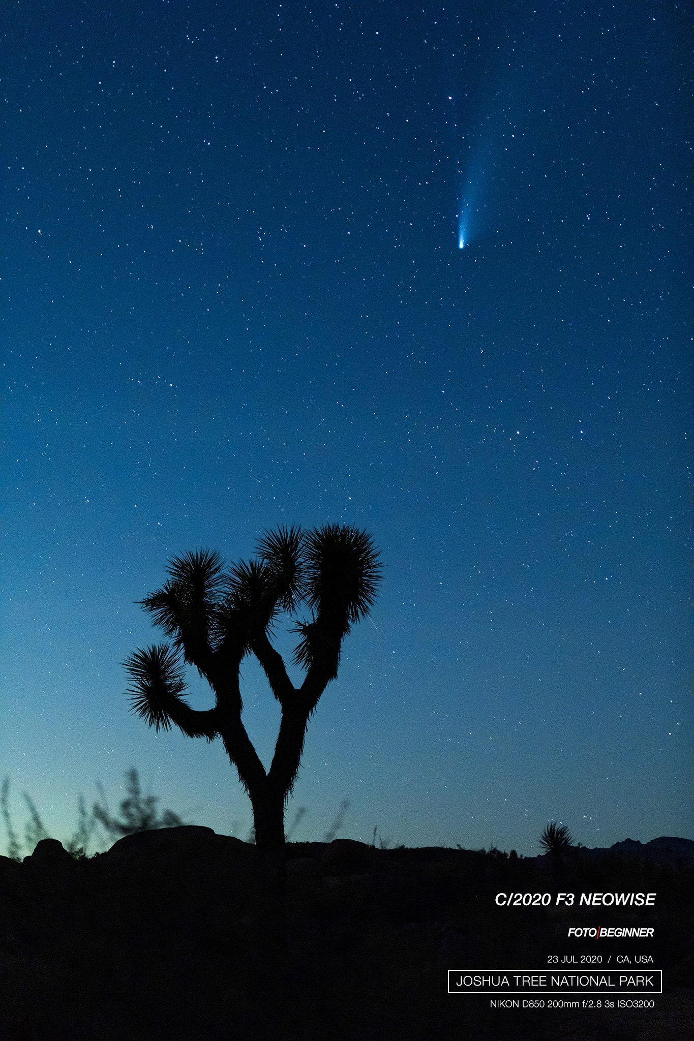 Joshua Tree with NEOWISE