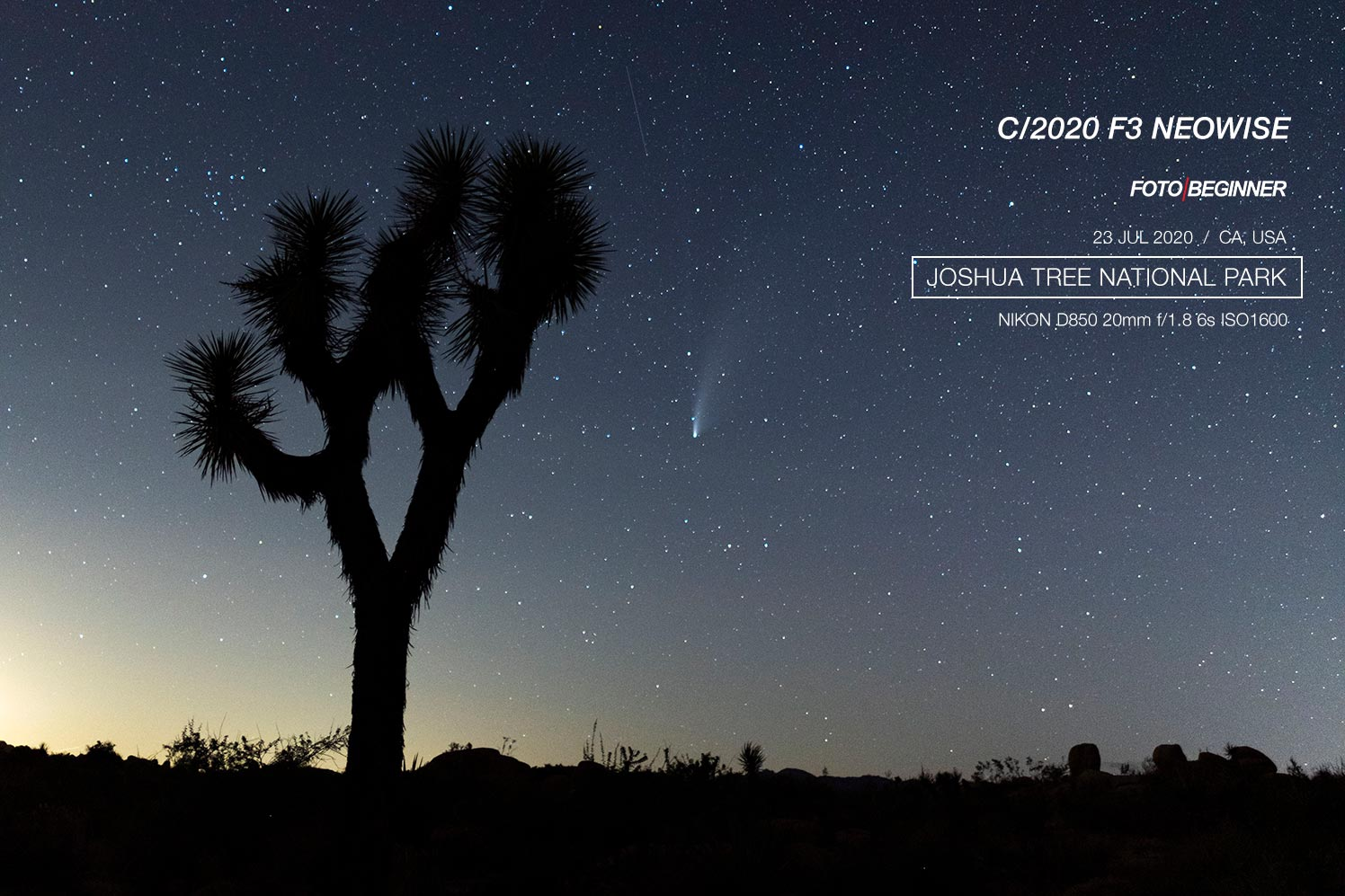 Joshua tree with neowise comet